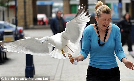 woman-attacked-by-hungry-seagull.jpg